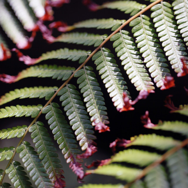 """Ferns"" stock image"