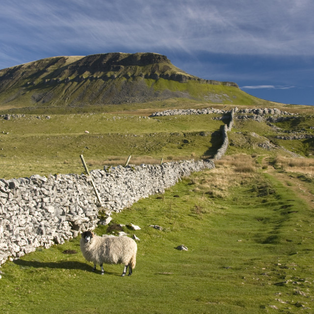 """""""Pen Y Ghent, Yorkshire dales."""" stock image"""
