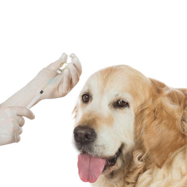 """""""Veterinary clinic"""" stock image"""