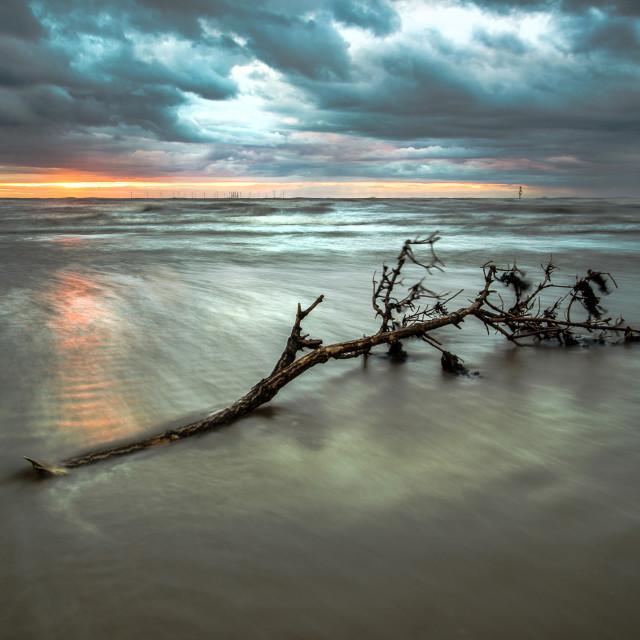 """""""Driftwood Sunset"""" stock image"""