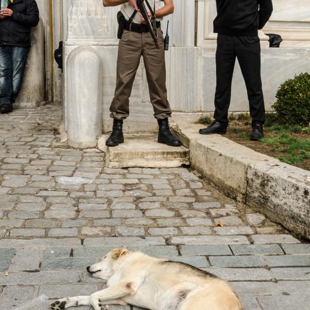 """Guard Dog"" stock image"