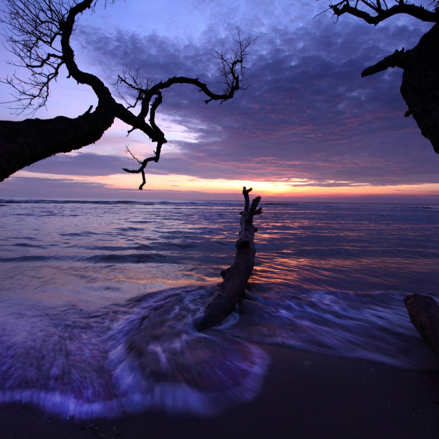 """""""dead tree trunk at beach"""" stock image"""