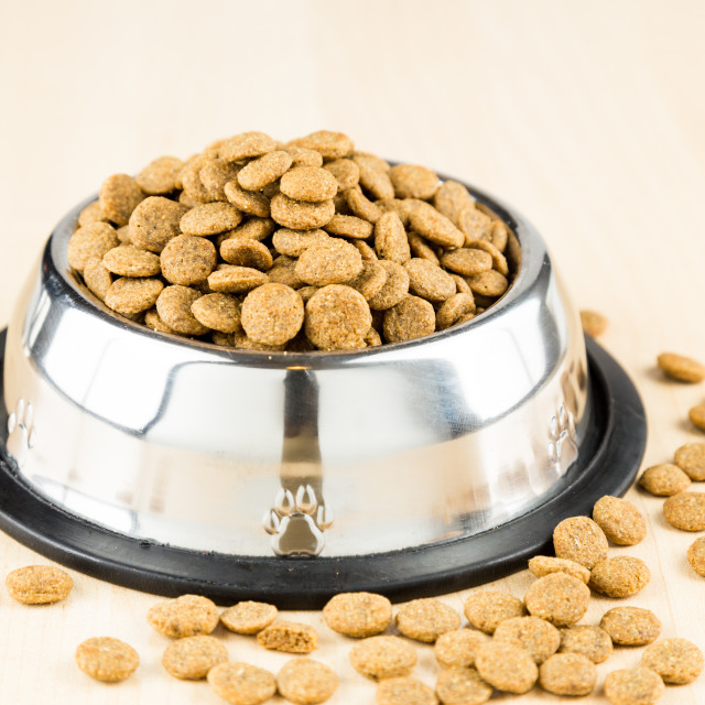 """Dog kibbles in a bowl with spill overs on wooden floor"" stock image"