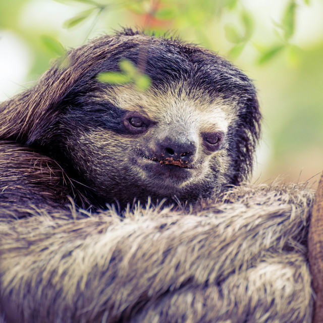 """A Sloth's Life"" stock image"