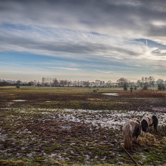 """Muddy Yorkshire Field in Winter"" stock image"