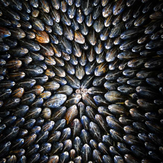 """Mussel-Eclade"" stock image"