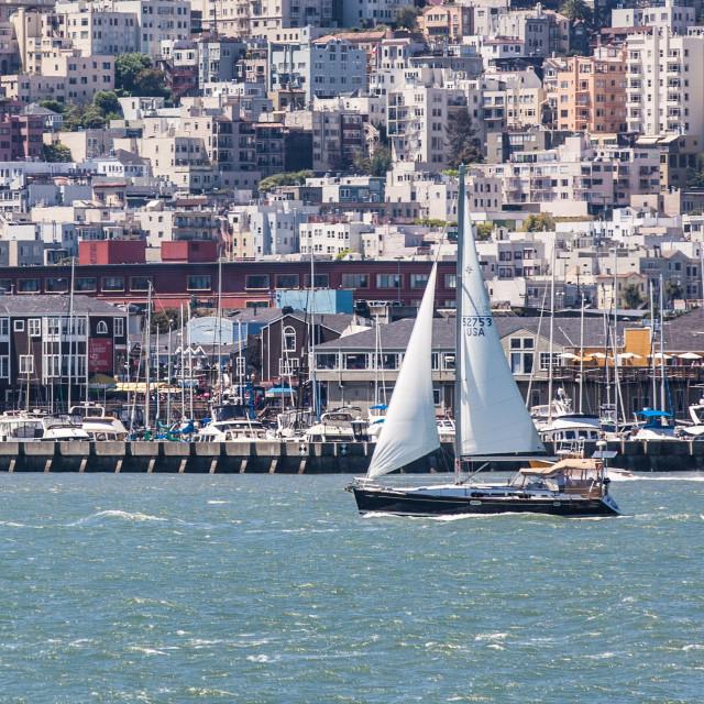 """""""San Francisco Sailboat"""" stock image"""