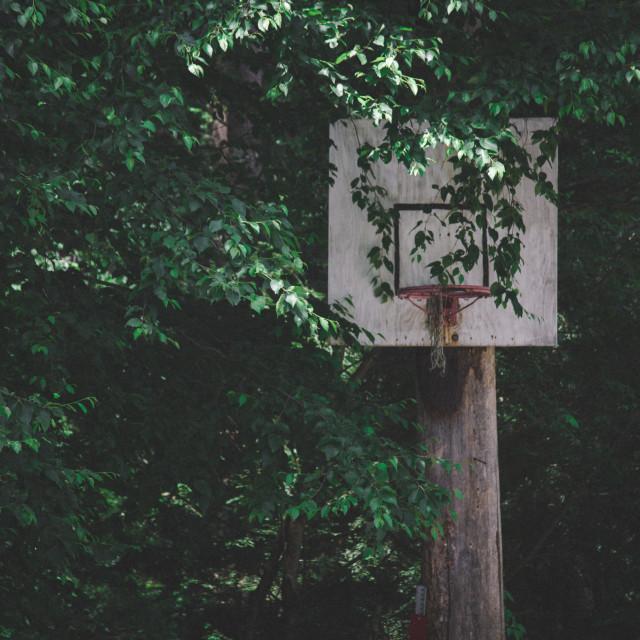 """""""Overgrown Hoop"""" stock image"""