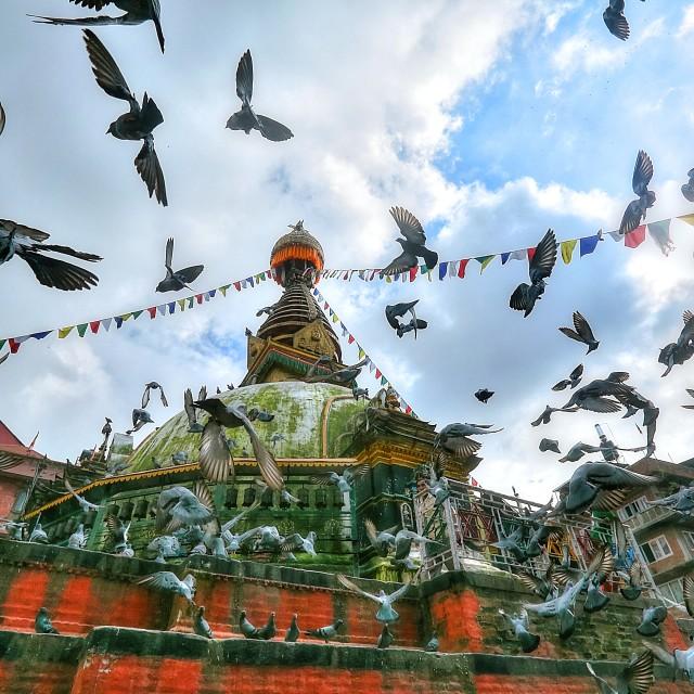 """""""pigeons and stupa"""" stock image"""
