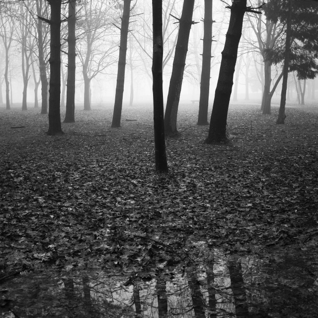 """""""Black and white image of Panoramic view of Park in winter morning"""" stock image"""