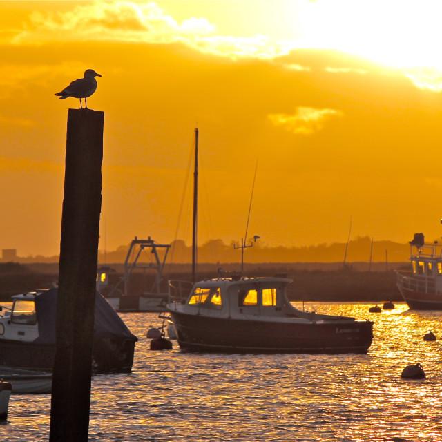 """Gull Patrol on Mersea Island"" stock image"