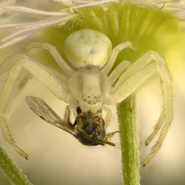 """Spider Under The Flower"" stock image"