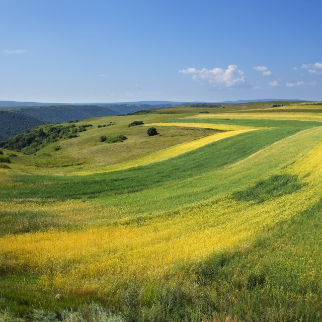 """Grass land"" stock image"