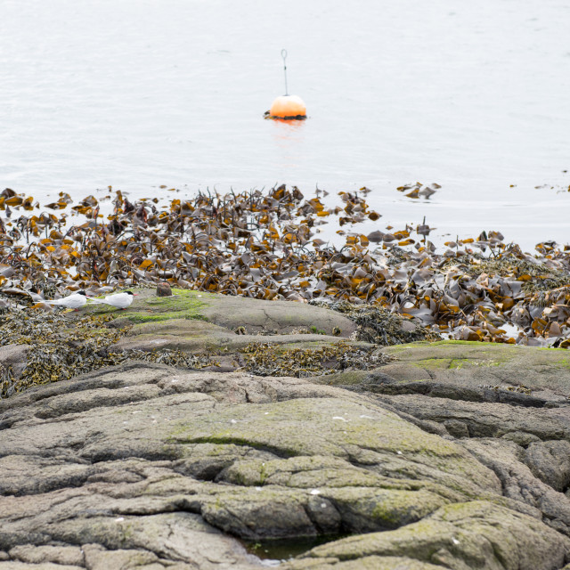 """""""Landscape with buoy and kelp"""" stock image"""