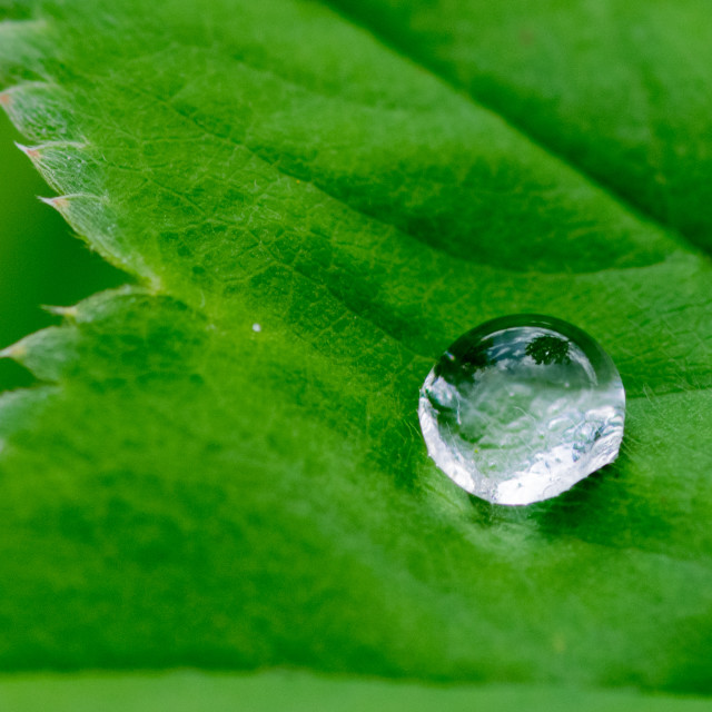 """Raindrop on green leaf"" stock image"