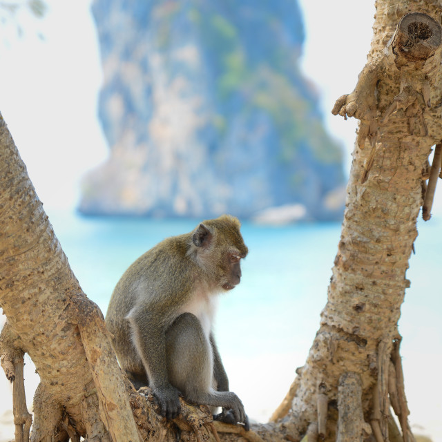 """""""Monkey sitting in a tree"""" stock image"""