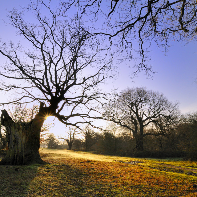"""First Light - Epping Forest"" stock image"