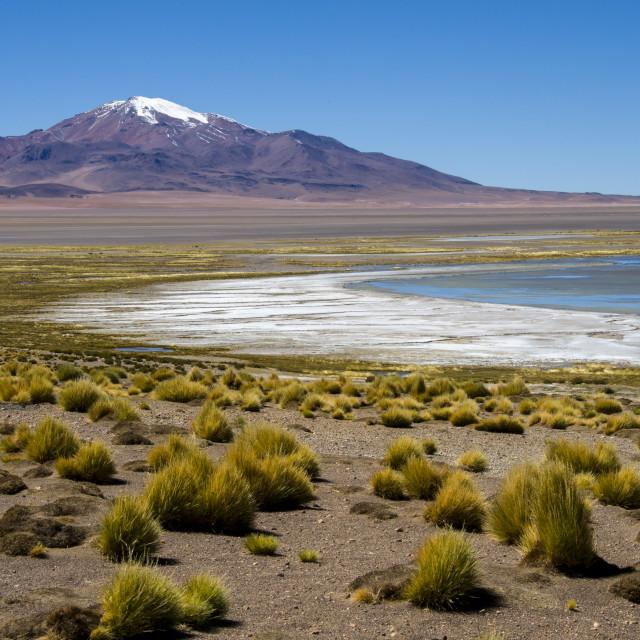 """Altiplanic lagoons in Atacama"" stock image"