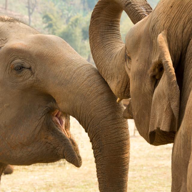"""Elephant love"" stock image"