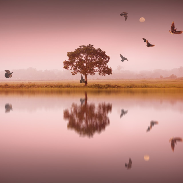"""""""A tree with reflection with birds"""" stock image"""
