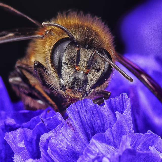 """bee"" stock image"