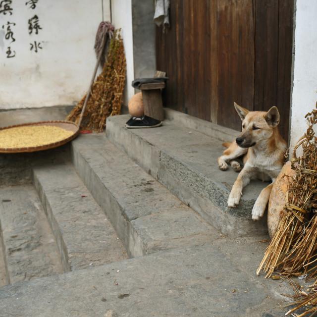 """""""Rural Dog"""" stock image"""