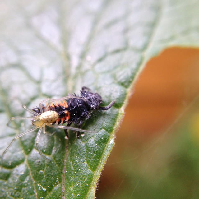 """Spider and ladybird larvae"" stock image"