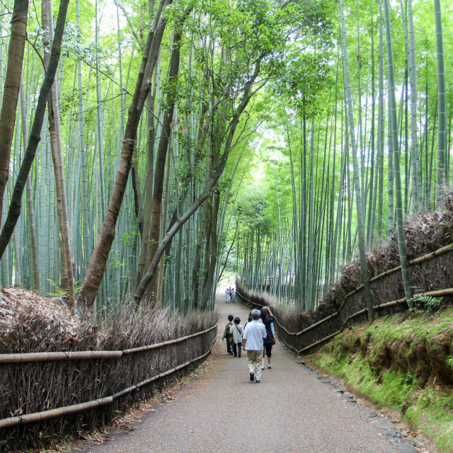 """Arashiyama Bamboo Groove Forest Path, Kyoto Japan"" stock image"
