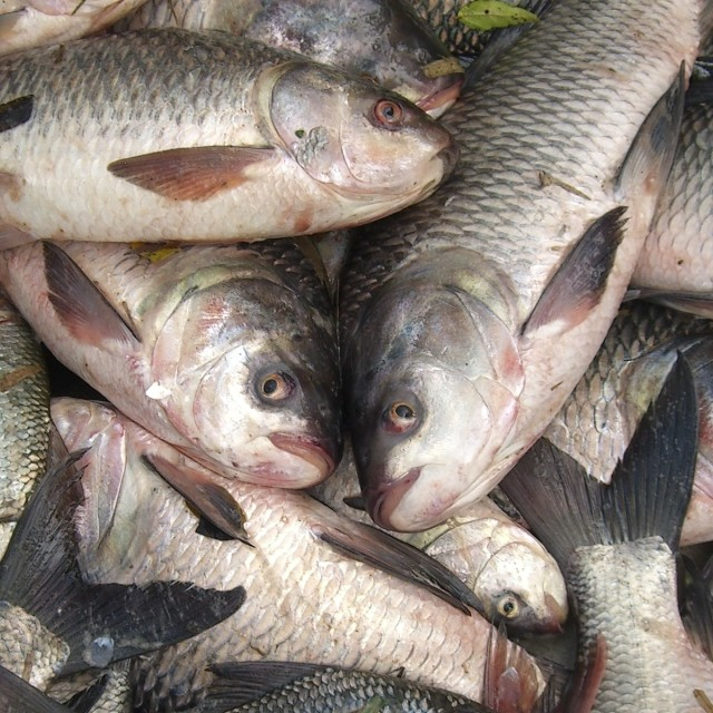 """""""Fish..fish..& fish"""" stock image"""