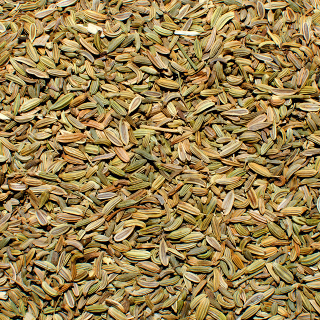 """Fennel Seeds"" stock image"