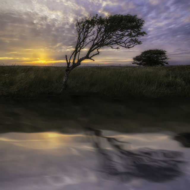 """""""A reflective leaning tree"""" stock image"""