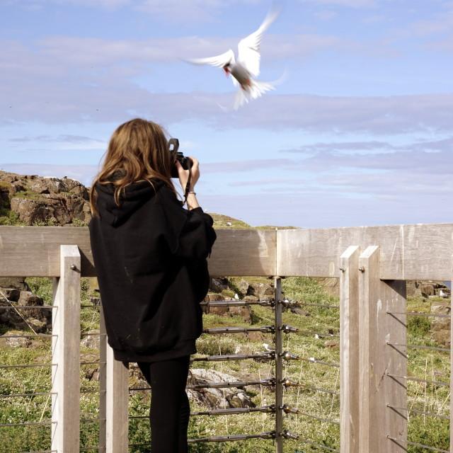 """Bird attack on photographer"" stock image"