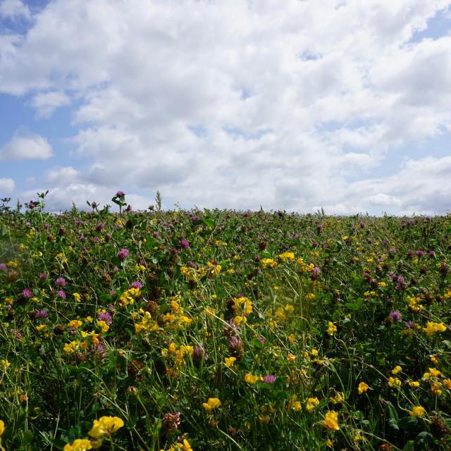"""Summer flower fields"" stock image"
