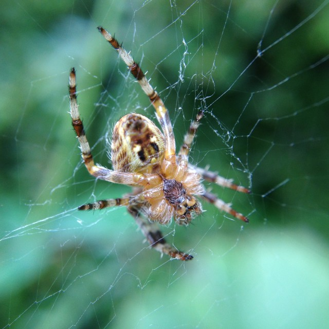 """""""Spider in a web"""" stock image"""