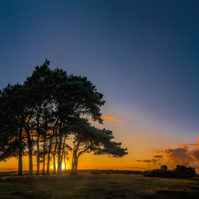 """Robin Hood Tree Clump, New Forest National Park"" stock image"