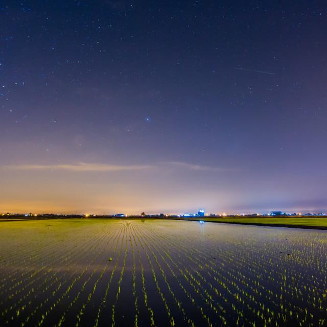 """Nightscape paddy field"" stock image"