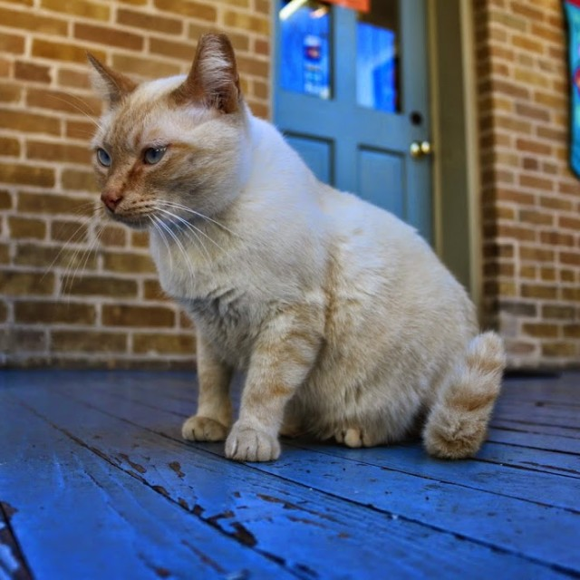 """Porch Cat"" stock image"