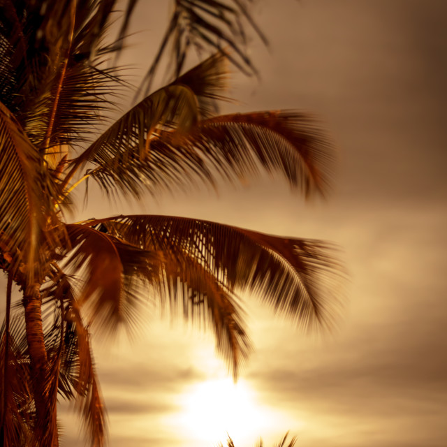 """""""Full moon and palm trees at night"""" stock image"""
