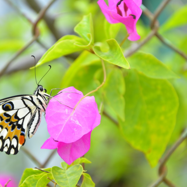 """butterfly with flower"" stock image"