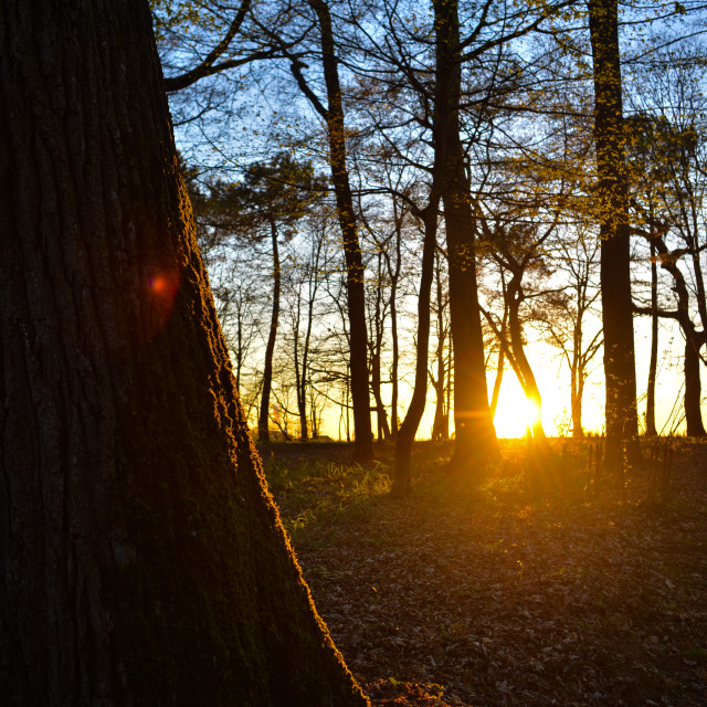 """""""Sunlight filtering through trees in forest"""" stock image"""