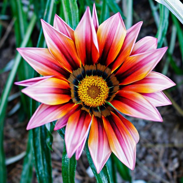 """THE BEAUTIFUL FLOWER"" stock image"