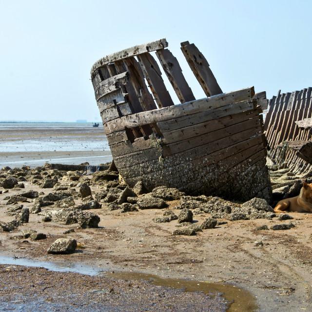 """Survivor of the Lost Ark"" stock image"
