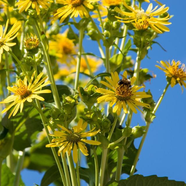 """""""Bees circling"""" stock image"""