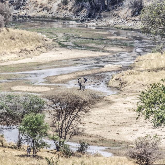 """Tarangire National Park"" stock image"