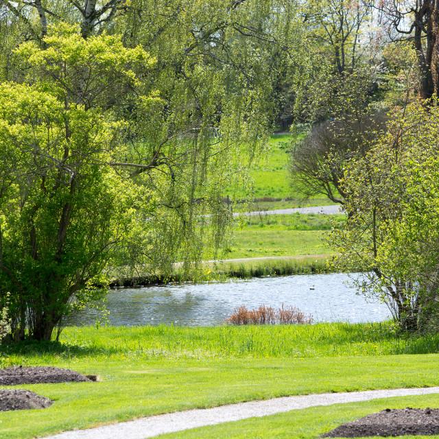 """""""Green spring landscape"""" stock image"""