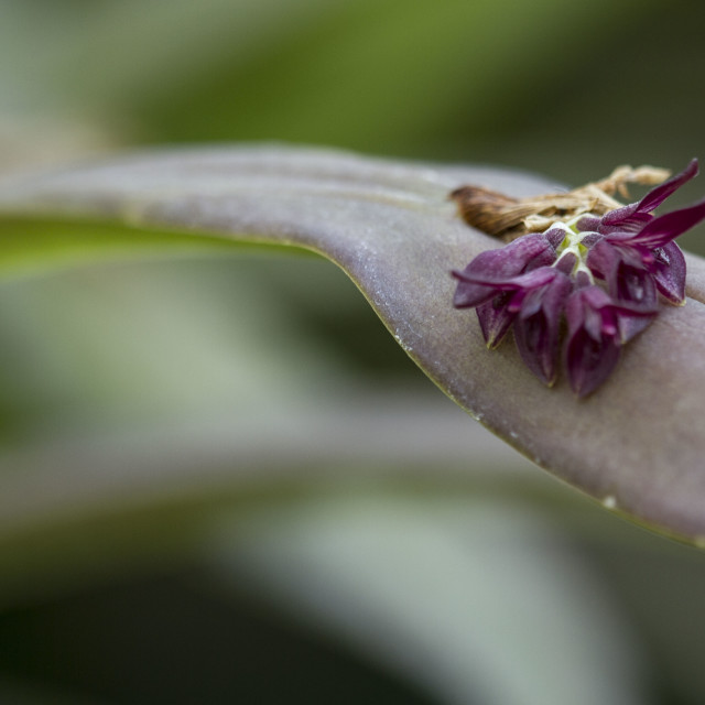 """purple tiny orchids"" stock image"