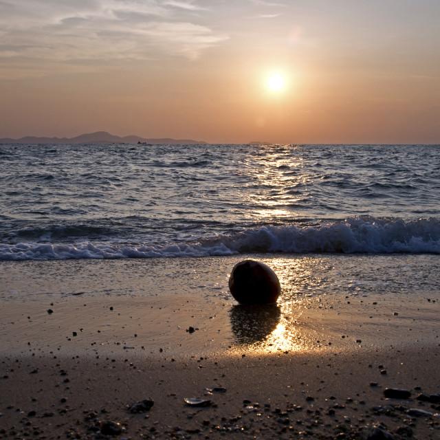 """Coconut Beach"" stock image"