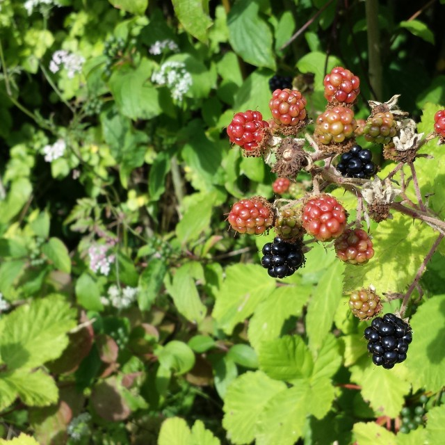 """""""Late summer fruits."""" stock image"""