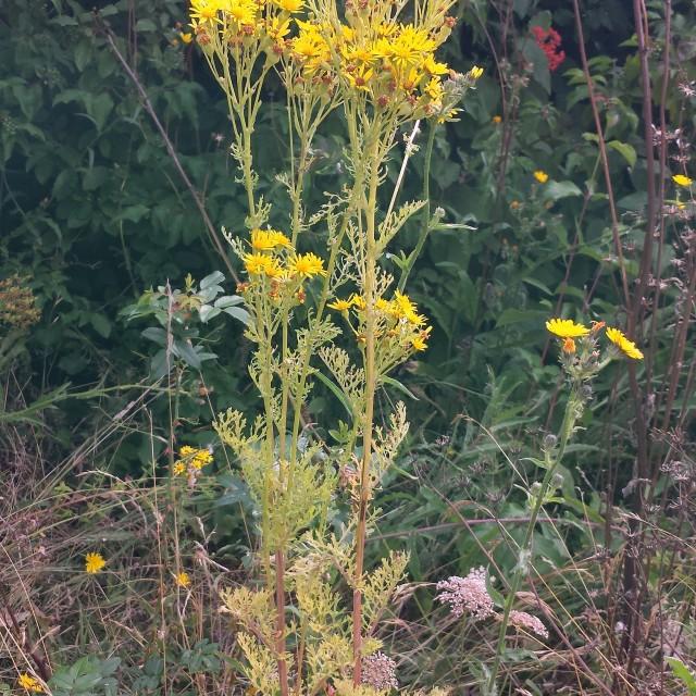 """Wild flower"" stock image"