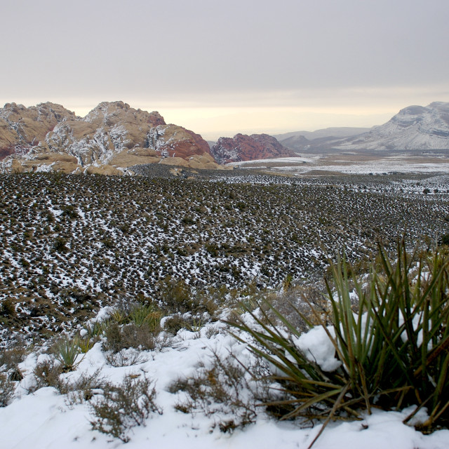 """Mojave dessert"" stock image"